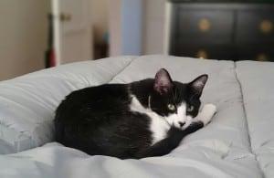 cat-807530_1280
